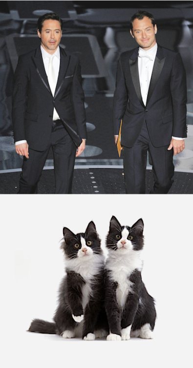 clovesmokecatharsis:  #ROBERT DOWNEY CATS #with bonus jude law cat