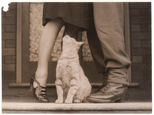 Soldier's goodbye & Bobbie the cat, ca. 1939-ca. 1945 by Sam HoodState Library of New South Wales collection