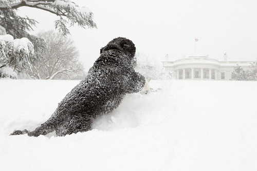 BoBama is SnowBama.