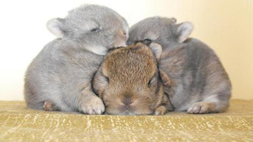 And more bunnies…