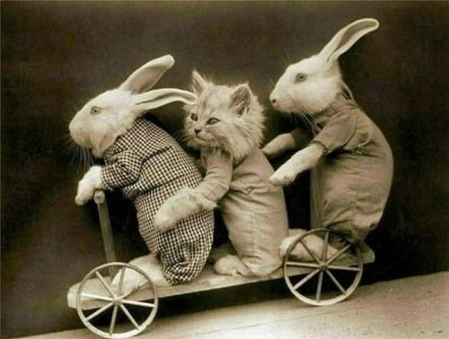 Aaaand…a couple more bunnies for the road.  And a kitty.  (A worrying blend of cruel & cute!)