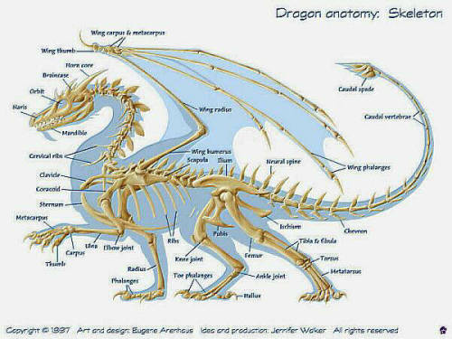 Dragon Anatomy via