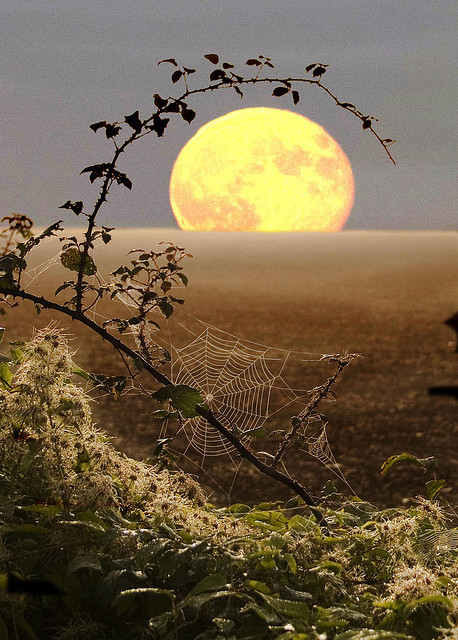 sunsurfer:  Spiderweb Moon, Fawler, England  photo via harvestheart