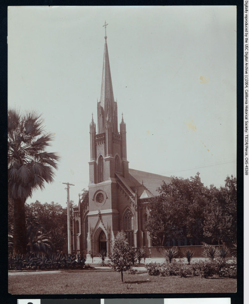 """Photograph of an exterior view of St. Mary's Catholic Church in Stockton, ca.1900. A small tree stand at center foreground in  a grass field spotted with flowering plants. A palm tree stands behind  the field at left and a street lies across its far side. The tall church  stands behind the street at center with an arched entrance and  extremely high, narrow steeple. A wall of trees extends from either side  of the church."""