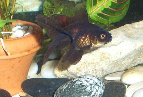 My fish, Murry, short for Rosemary (#2 since Murry #1 committed suicide). via image02.webshots.com