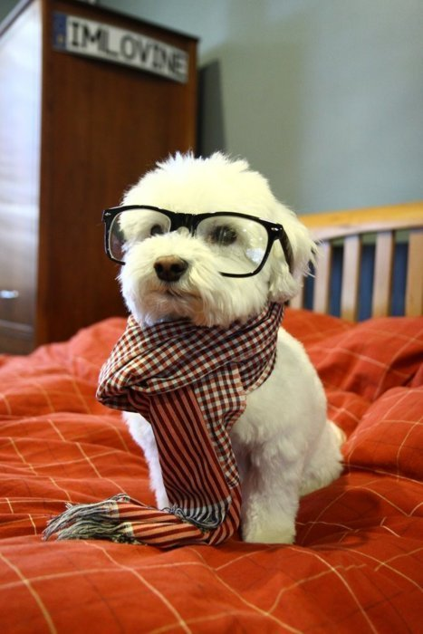 hipster dog. too cool for you.
