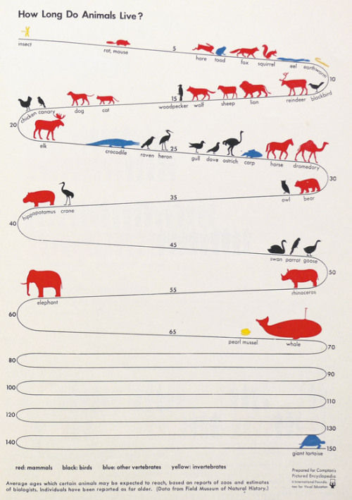 vizualize:  Nice post about vintage infographics on Information is Beautiful   And then there's the lobster which is thought to live forever.
