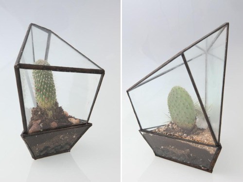 pratt:  Assembly New York Terrariums