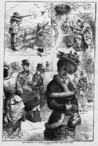 "1884: ""'The cruelties of fashion: fine feathers make fine birds'; the collection of feathers for hats led to the near extinction of wading birds in the Everglades."""