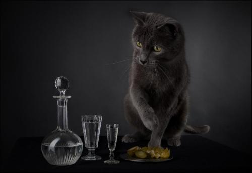 Life in a still life! Photo by Ìîðîçîâ Âàk