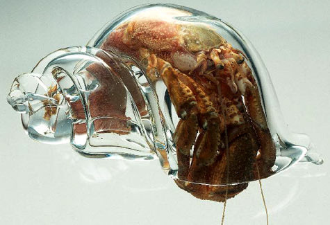 Scientists at the New Zealand Marine Studies Centre placed glass shells  into a hermit crab tank. The crabs moved into the glass shells shortly  after, allowing scientists to study the crabs.