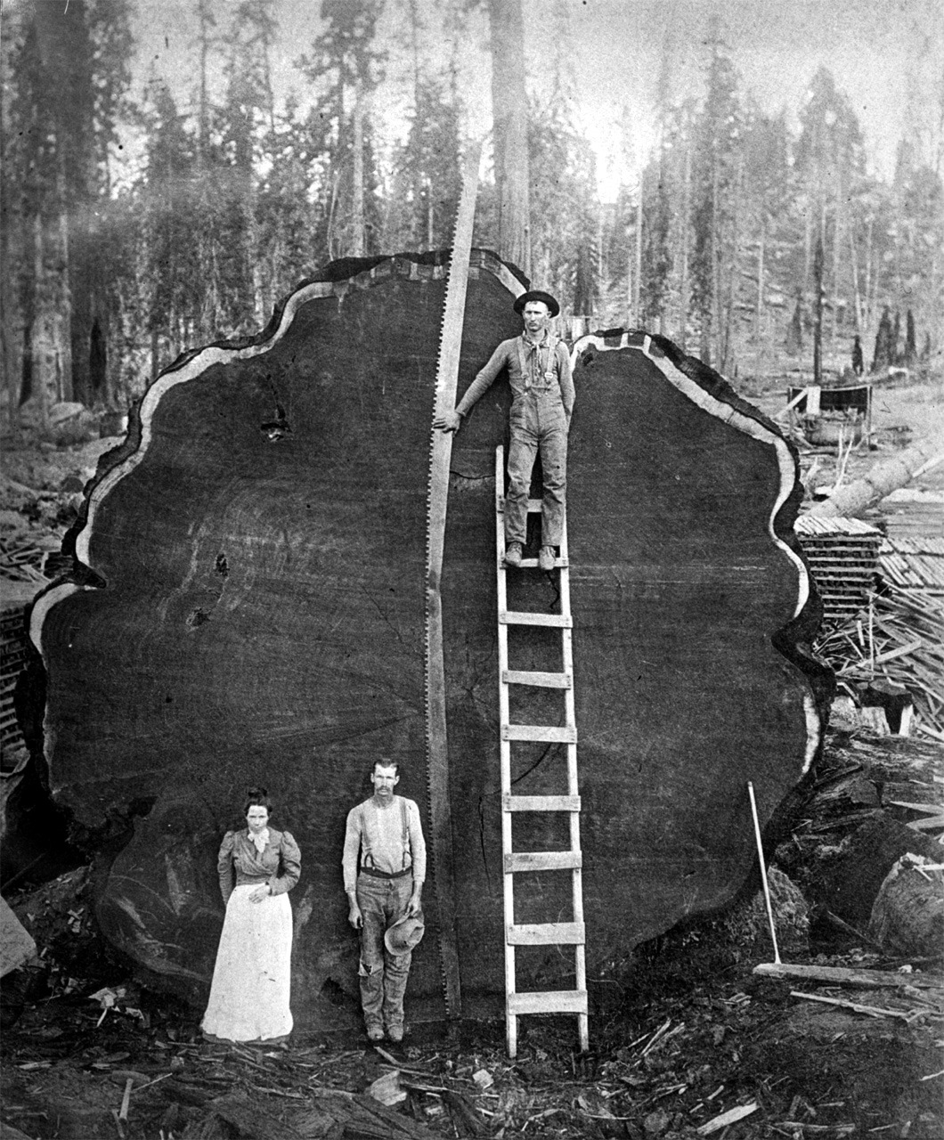 familiale:  A giant sequoia log, Sequoia National Park, California, undated, c1910. (via Historic American Engineering Record)