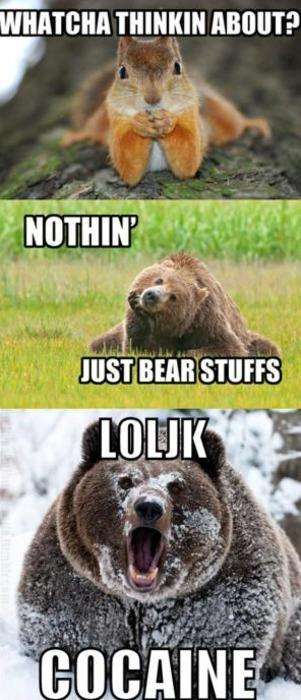 WHATCHA THINKIN ABOUT?  - NOTHIN'  - JUST BEAR STUFFS LOLJK COCAINE