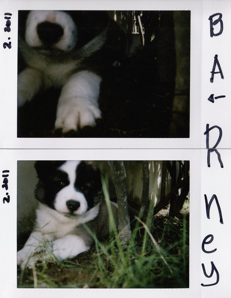 Meet Barney Fuji Instax Mini 7