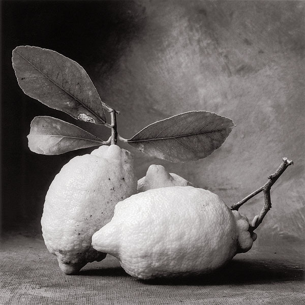 Tuscan Lemons DeCosse, Cy, b.1929 21st Journal of Contemporary Photography Vol. IV, 				2000 20.4 x 20.4 cm Photogravure