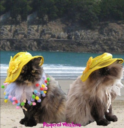 """Fashionable and practical, the Pet Sun Hat ensures that your cat is protected while spending an afternoon in the  garden or at the beach — a favorite hangout spot of cats everywhere.  At  $15, it's a great value, and the golden yellow pairs nicely with any  fur color."""
