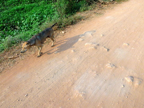 Street dog. We went on a cycling tour this morning. We rode through the nearby villages, and got to see some local life away from the main tourist areas. Very cool.