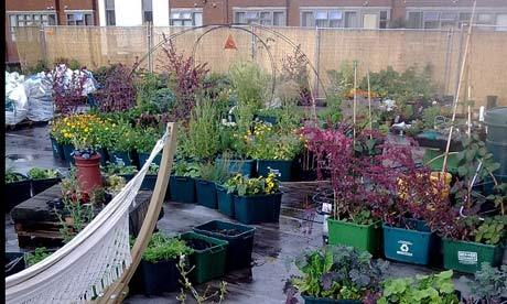 Via urbanfarmingphotos:  The supermarket growing food on its roof - Laura Barnett Food from the Sky has planted a vegetable garden on a shop roof in north London – and its founder wants other shops around the country to do the same…