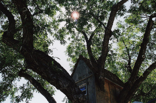 razorbladesalvations:  by Jen  I've always wanted a tree house.