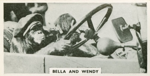 Bella and Wendy