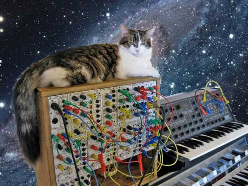 SPACE SYNTHIMALS!!! Galactic modular cat stare.  Original @ http://www.flickr.com/photos/amstrad/5419268670/