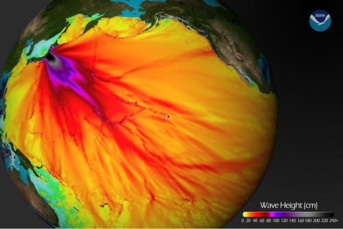 Tsunami Wave Height Model Shows Pacific-Wide Impact