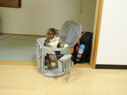 Yes, I was concerned about Maru's well-being after hearing about the earthquake. 私信