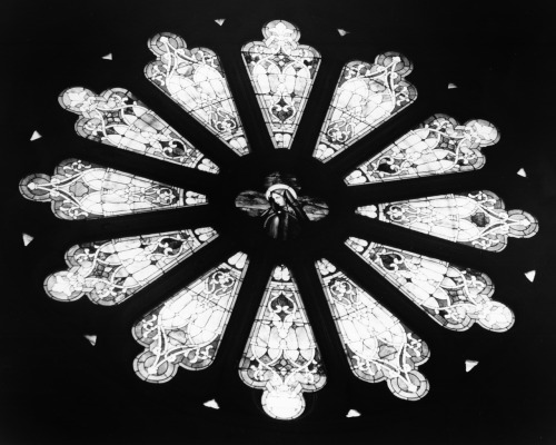 @ 1997 Melissa Martinez PhotographyThis Rose Window is one of many beautiful stained glass windows in the Cathedral de Guadalupe in downtown Dallas, TX. At over 100 years old, this Cathedral is truly a piece of history in Dallas. My father actually played the organ for Sunday masses at the Cathedral. I was in this church with him every Sunday as a little girl. I took this shot back in high school. I just love the deep contrast of this image.