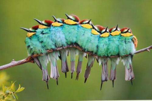 Aren't these birds lovely? From a distance they looked like a catepillar!