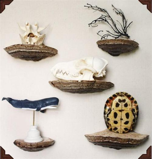 DIY: How-To: Turn Shelf Fungi Into Actual Shelves