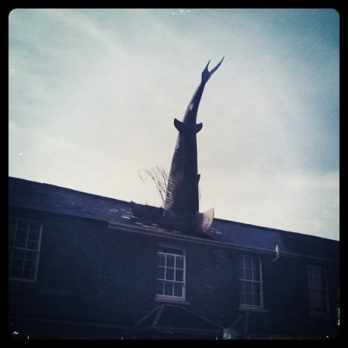 I think this shark may be a tad lost… (Taken with Instagram at Oxford)