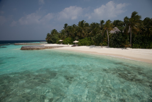 Fesdu Island, Maldives - W Retreat and Spa. The best island resorts in the Maldives are remote, small and have breathtaking house reefs surrounding them. At the W we swam with turtles, rays, five species of shark and clouds of spectacularly colourful fish just metres from our accommodation