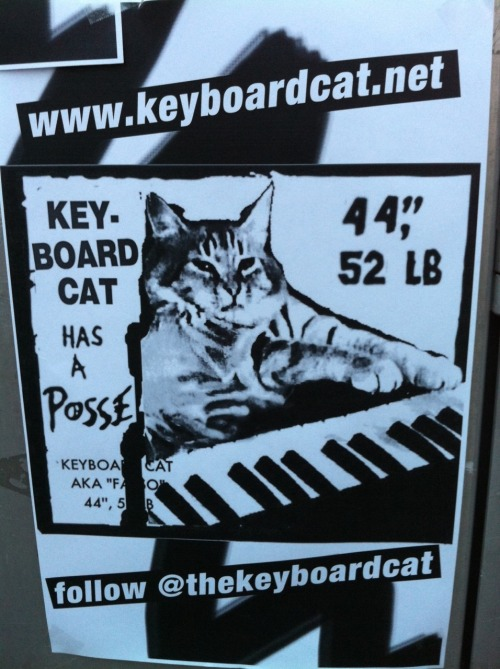 jemimakiss:  Keyboard cat at SXSW!