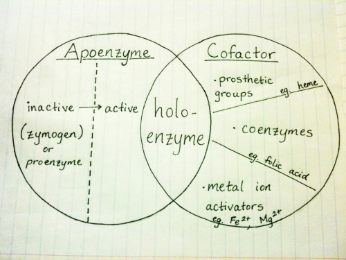 In more mathematical/formulaic terms, Apoenzyme + Cofactor = Holoenzyme