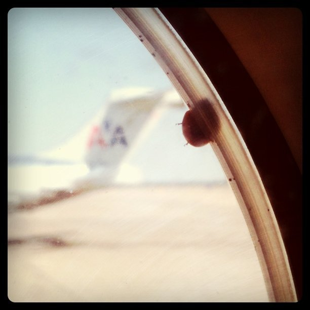 courtenaybird:  Ladybug.  (Taken with Instagram at Dallas/Fort Worth International Airport (DFW) ✈)