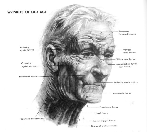 Wrinkles of Old Age by Stephen Rogers Peck.  Note that this image is part of a large post by storyboard artist Mark Kennedy on drawing people of different ages that also includes diagrams from Andrew Loomis.  If you are an artist, this is a fantastic resource he has cobbled togather. via sevencamels.blogspot.com