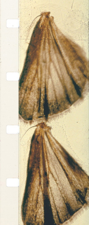 In 1963, the experimental filmmaker Stan Brakhage released Mothlight, made in part by pressing moth wings between two clear strips of film and then projecting this as a film print. An interesting aspect of this film is that the moth wings, as can be seen from the filmstrip image, often run over two or more frames. Even in this seemingly unimportant detail, the work challenges the idea of the film frame as a means of sampling and fixing reality. Brakhage's images in Mothlight do literally break out of the frame. Our imagistic reality cannot be contained, neither in thought, nor in frames.