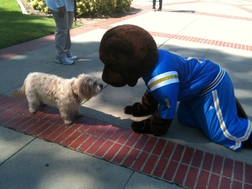 Joe Bruin (via UCLA Fund)