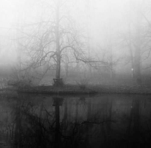 Morning fog, near Hagen 2011.