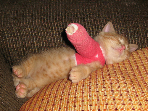 cute-baby-animals:  ARE YOU FOR-REALIZISE?  THE KITTEN IS HURT, BUT IT'S STILL TOO ADORABLE FOR WORDS.  POOR KITTEN.  AND CUTE KITTEN.  OMG.  SO CUTE.