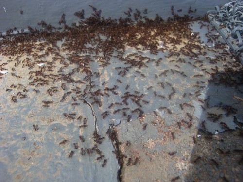 I hate seeing ants like this.
