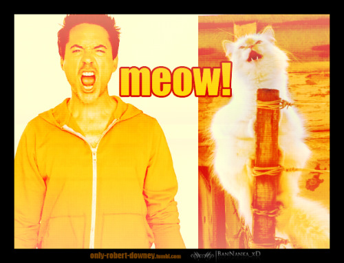 only-robert-downey:  I want to pet the cat! xDD (left xDD)