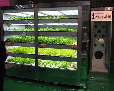 Vending Machine Grows 20,000 Heads of Lettuce a Year Without Sunlight
