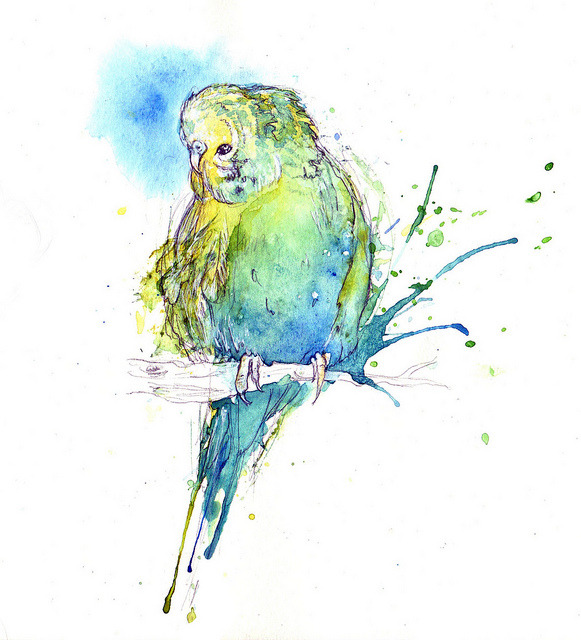 Budgie I (by Amy Holliday)