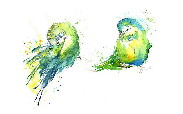 Budgies IV (by Amy Holliday)