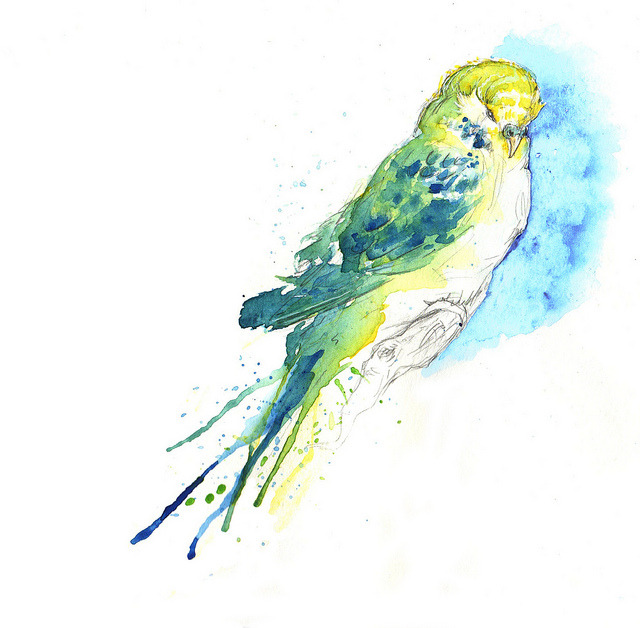 Budgie II (by Amy Holliday)