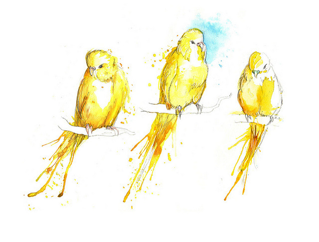 Budgies V (by Amy Holliday)
