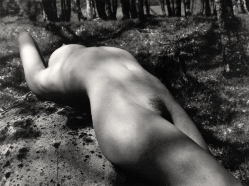 Nude In Wood Series,No 1, 1985  by John Swannell [see No 2 & more]