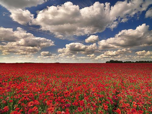 mirlyam:  prettylittleflower:  Wiltshire (by peterspencer49)  Gyönyörű!!