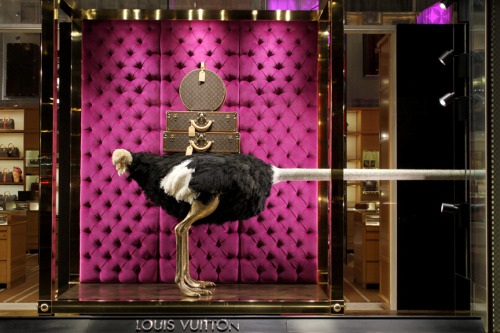 Sneak Peek: Louis Vuitton Ostrich Windows. 2011